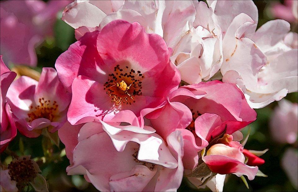 Sweet Ella Flowers